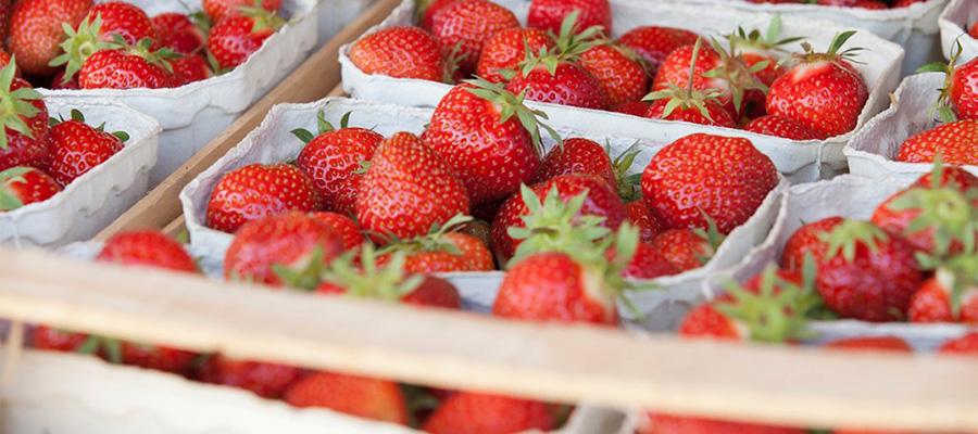 Während der Erdbeer-Hauptsaison können Sie auf den ersten Blick erkennen: Die Beeren sind süß und aromatisch – einfach köstlich!