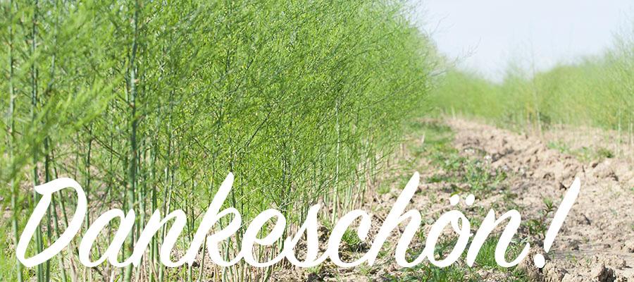 Wenn wir die Spargelernte beenden, wachsen die Spargelpflanzen zu wunderschönen grünen Büschen heran.